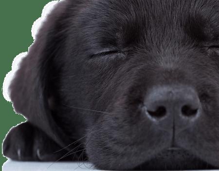 basic wellness dogs 2